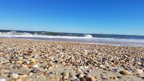 Outer Banks beach shells royalty free stock photo
