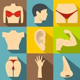 Outer part of body icons set, flat style Stock Photo