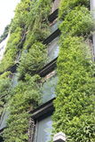 The outer walls and Green plants. The outer walls of the office buildings decorated with green plants,This is a very the design of environmental protection stock image