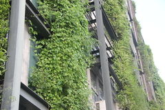 The outer walls of the greenery adornment Stock Image