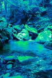 Outflow of chlorophyll algae in the primary era Stock Photography