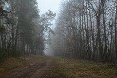 Outgoing road in a misty forest Royalty Free Stock Photography