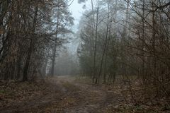 Outgoing road in a misty forest Royalty Free Stock Image
