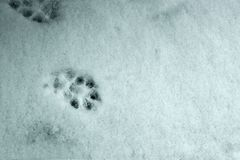 Outgoing tracks of the dog on the first snow. Outgoing tracks of the dog on the first sno stock images