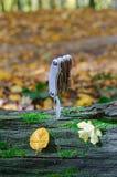 Outil multi sur un grand bois de construction couvert de mousse photo libre de droits