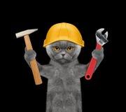 Outils de fixation de constructeur de chat dans des ses pattes photos stock