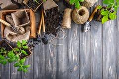 Outils de jardin avec des jeunes plantes de pot et de sol image libre de droits