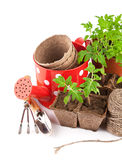 Outils de jardin avec des jeunes plantes végétales Photographie stock