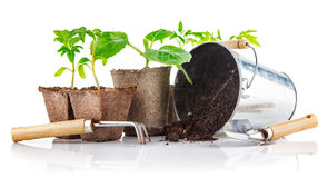 Outils de jardin avec des jeunes plantes végétales Photos stock