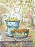 Outils de jardin d'aquarelle Photo stock