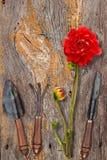 Outils de jardin de vintage Photo libre de droits