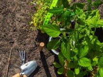 Outils de jardinage, bo?te d'arrosage, jeunes plantes, plantes et sol photos libres de droits