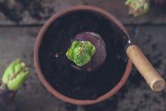 Outils de jardinage, fleurs de jacinthe, sur le fond en bois Le jardin de ressort fonctionne le concept Vue supérieure photographie stock