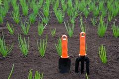Outils de jardinage neufs, plateau de canne Photographie stock libre de droits