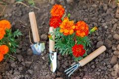 Outils de jardinage neufs, plateau de canne Image stock