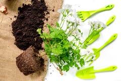 outils et au sol de jardin verts pour planter des fleurs sur la vue supérieure de fond blanc de table Images stock