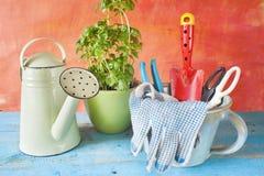 Outils et basilic de jardinage Image libre de droits