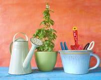 Outils et basilic de jardinage Photo stock