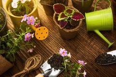 Outils et fleurs de jardin en soleil Image stock
