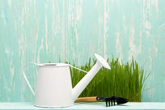 Outils et herbe de jardinage Images stock