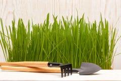 Outils et herbe de jardinage Photographie stock