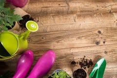 Outils et herbes de jardinage extérieurs Image stock