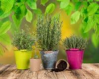 Outils et herbes de jardinage extérieurs Photos libres de droits