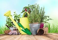 Outils et herbes de jardinage extérieurs Photo stock