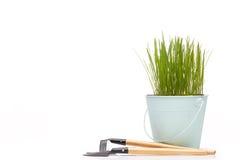 Outils et jeunes plantes de jardinage Image libre de droits