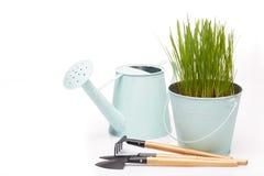 Outils et jeunes plantes de jardinage Image stock