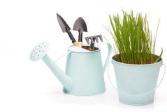 Outils et jeunes plantes de jardinage Images stock