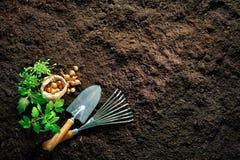 Outils et jeunes plantes de jardinage sur le sol image stock