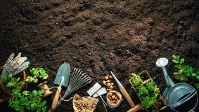 Outils et jeunes plantes de jardinage sur le sol image libre de droits