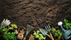 Outils et jeunes plantes de jardinage sur le sol photographie stock