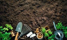 Outils et jeunes plantes de jardinage sur le sol images stock
