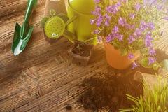 Outils et usines de jardinage extérieurs Photographie stock libre de droits