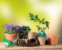 Outils et usines de jardinage extérieurs Image stock