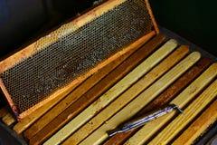 Outils pour l'apiculture et des accessoires de miel cadre avec la structure de cire d'abeilles complètement du miel frais d'abeil photo stock