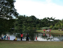 Outing by the Lake. Families enjoying feeding the swans and tortoises by one of the lakes in the Singapore Botanic Gardens Royalty Free Stock Images