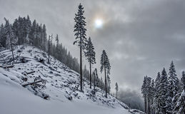 Snowy Alpine Forest on Cloudy Afternoon Stock Photos