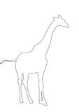 Outline of an african Giraffe. Digitally Hand Drawn Illustration Royalty Free Stock Image
