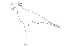 Outline of an african Secretary Bird. Digitally handdrawn illustration on white background Stock Images