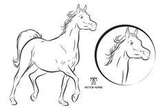 Outline arabian vector horse. Outline dressage vector horse illustration beautiful animal Stock Image