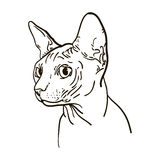 Outline cat sphynx vector illustration. Stock Photo