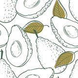 Outline eamless pattern with avocado and leaf Stock Image