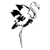 Outline flamingo hand draw Royalty Free Stock Images
