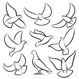 Outline flying doves, white birds and pigeons vector logos. Holy spirit, easter, love and peace design elements. Dove sketch, bird pigeon freedom and love Royalty Free Stock Photo