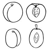 Outline fruit peach and plum. royalty free illustration