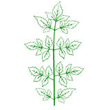 Outline of a green plant Stock Images
