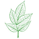 Outline of a green plant Royalty Free Stock Photo